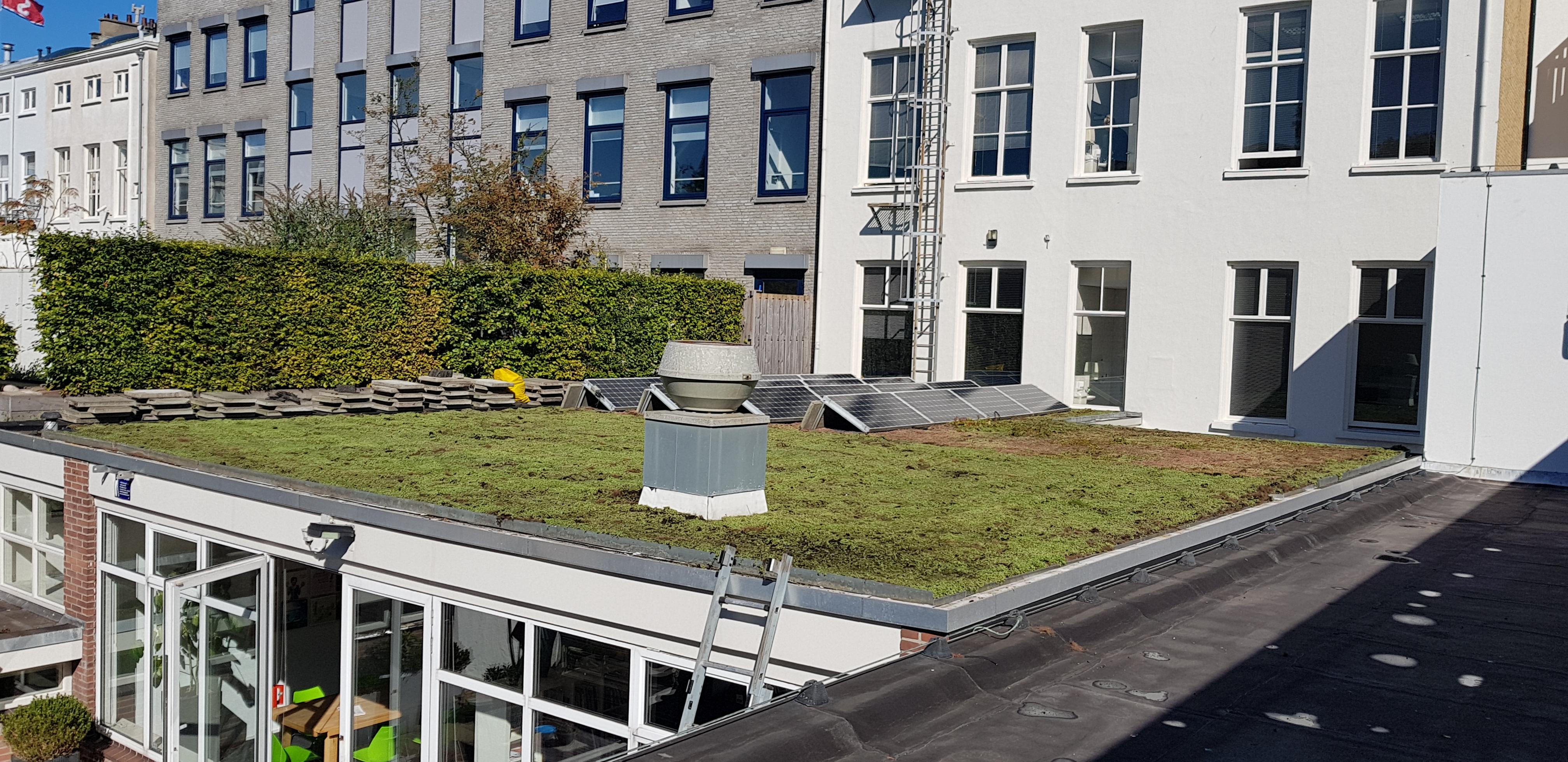 Groen dak, Den Haag